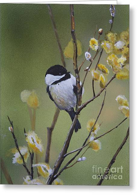 Chickadee  Greeting Card by Margit Sampogna