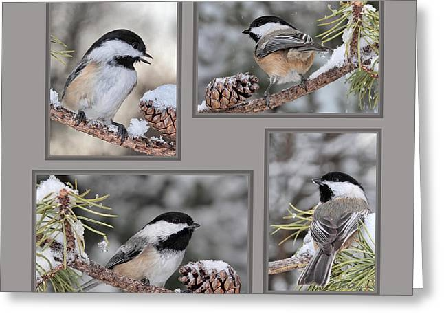 Chickadees In Winter Greeting Card