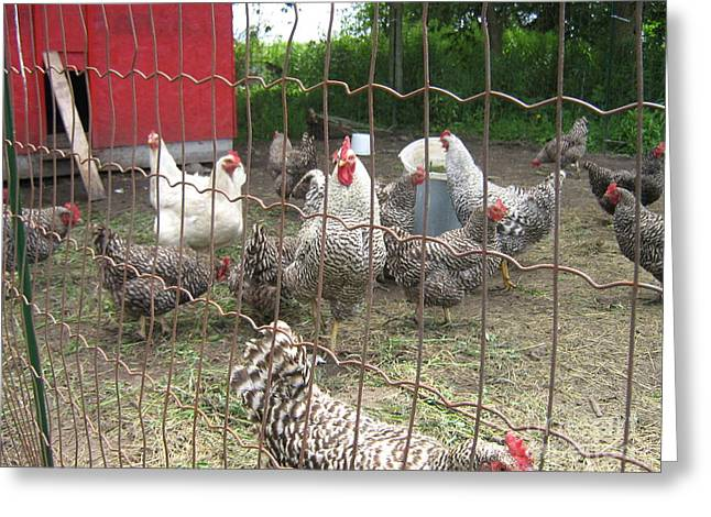 Chicken Coop. Greeting Card