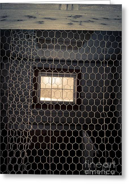 Chicken Wire On A Door Of An Old Chicken Coop Greeting Card