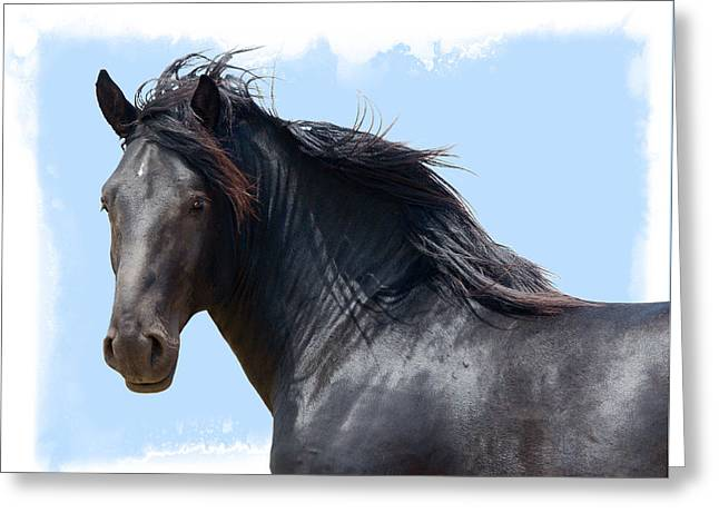 Chief - Windy Portrait Series 3 Greeting Card