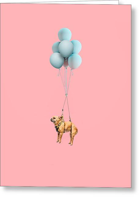 Chihuahua Dog Floating With Balloons Greeting Card