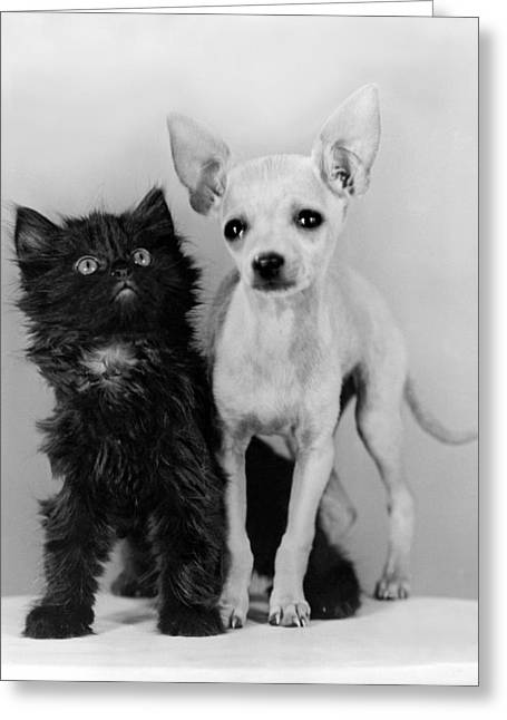 Chihuahua Has Kitten Sidekick Greeting Card