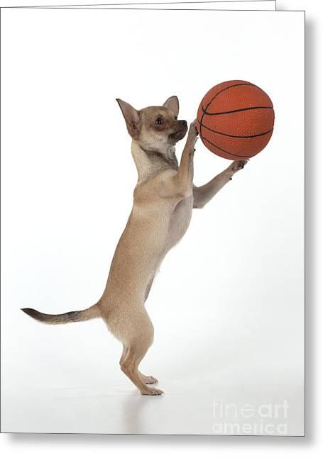 Chihuahua Playing Basketball Greeting Card
