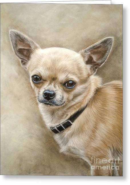 Chihuahua Greeting Card by Tobiasz Stefaniak