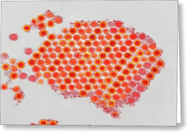 Chikungunya Virus Particles Greeting Card