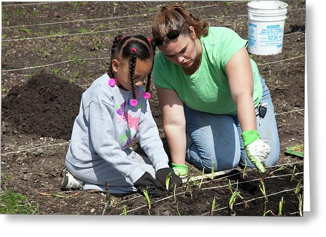 Child And Adult Planting Onions Greeting Card