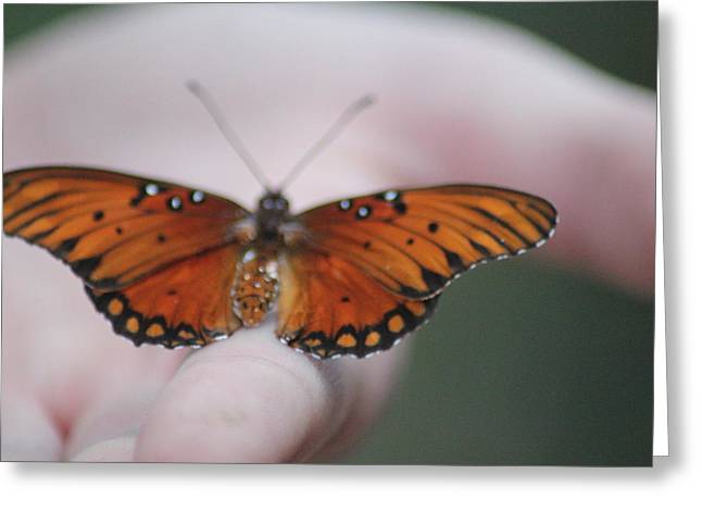 Child And Butterfly - We Shall Renew Again Greeting Card