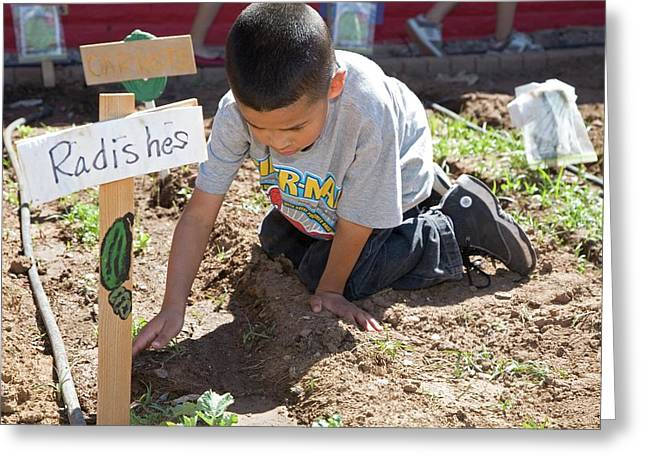 Child Learning Organic Gardening Greeting Card by Jim West