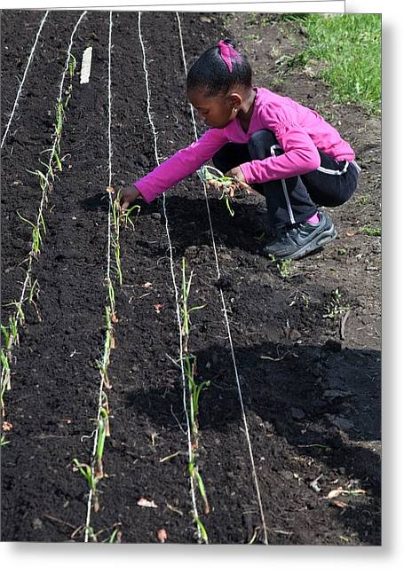 Child Planting Onions Greeting Card