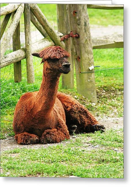 Chill-paca Greeting Card by Christopher Hoffman