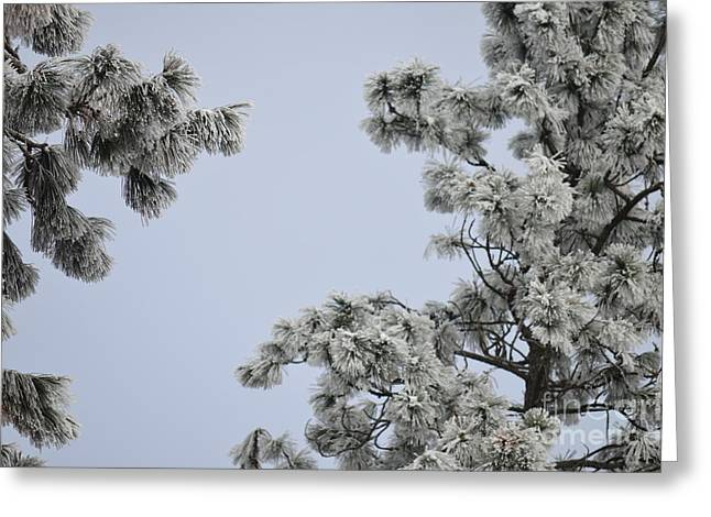 Chill Tree Greeting Card by Greg Patzer