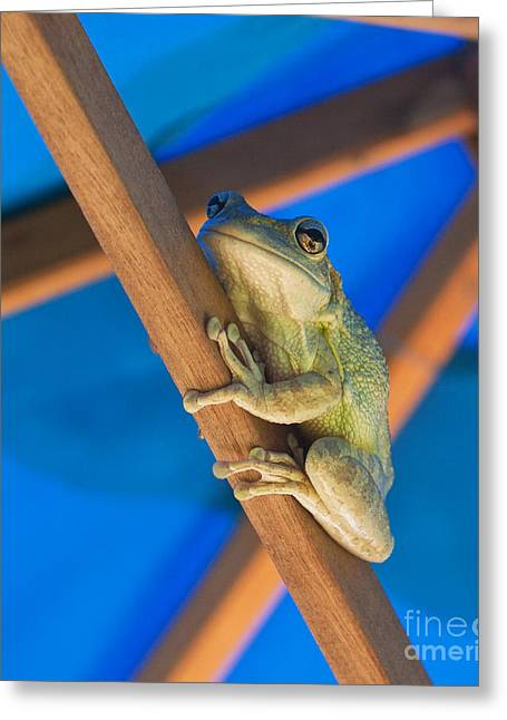 Chillin By The Pool Greeting Card by Michelle Wiarda