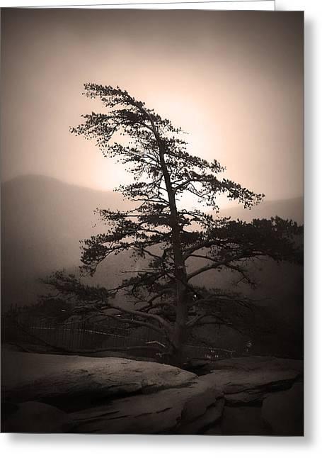 Chimney Rock Lone Tree In Sepia Greeting Card by Kelly Hazel