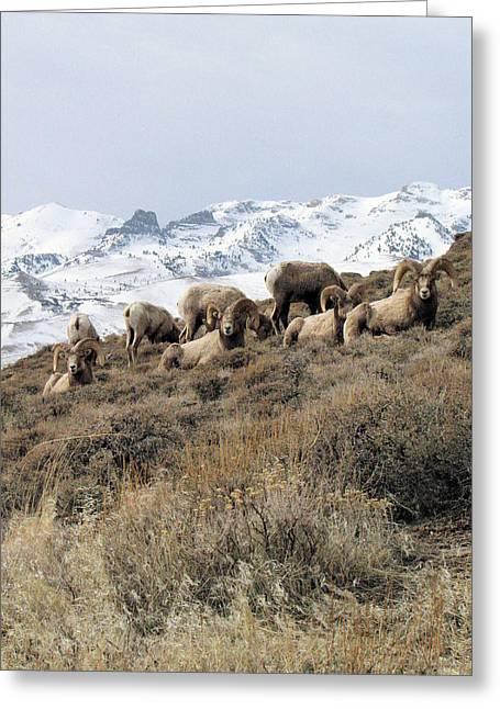 Chimney Rock Rams Greeting Card