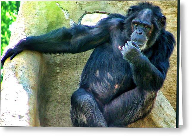 Greeting Card featuring the photograph Chimp 1 by Dawn Eshelman