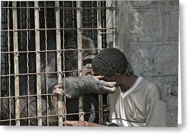 Chimpanzee And Boy Greeting Card