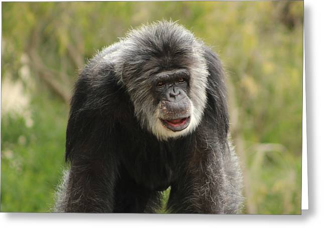 Chimpanzee Greeting Card by Deana Glenz