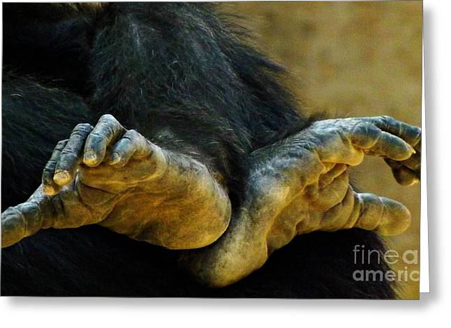 Chimpanzee Feet Greeting Card by Clare Bevan