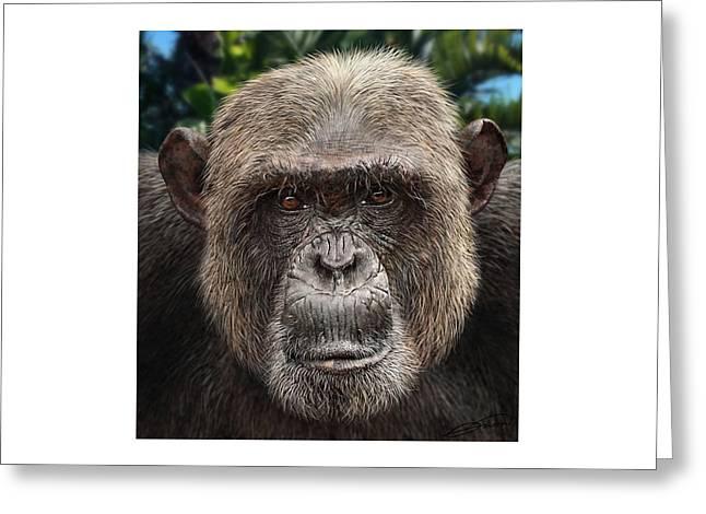 Chimpanzee Male Greeting Card