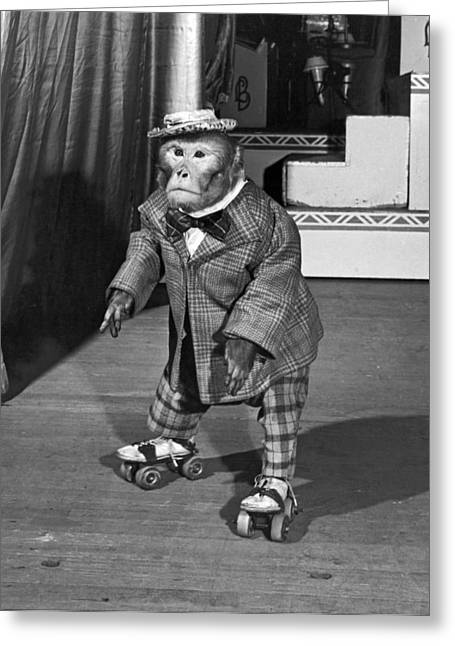 Chimpanzee On Skates Greeting Card by Underwood Archives