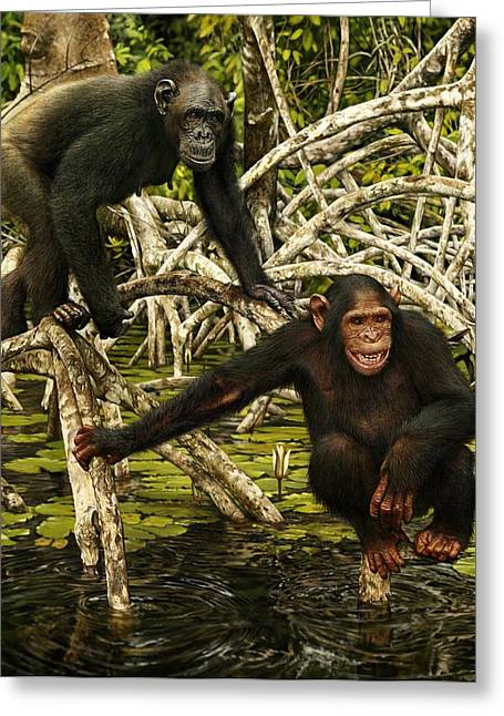 Chimpanzees In Mangrove Greeting Card by Owen Bell
