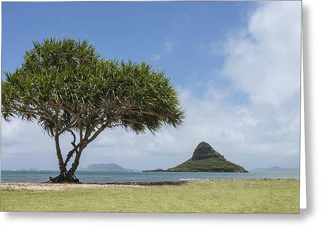 Chinamans Hat With Tree - Oahu Hawaii Greeting Card by Brian Harig