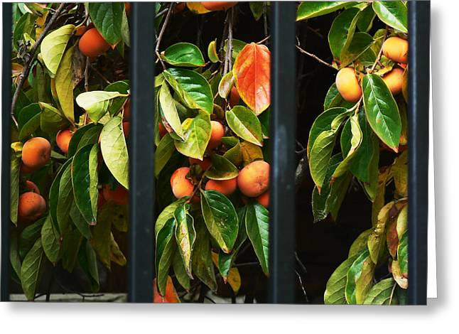 Chinatown Persimmons Greeting Card by Pamela Patch