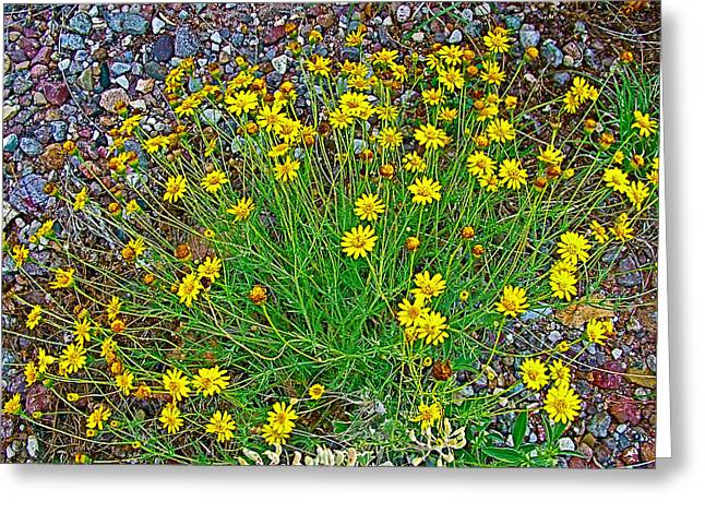 Chinchweed In Big Bend National Park-texas Greeting Card