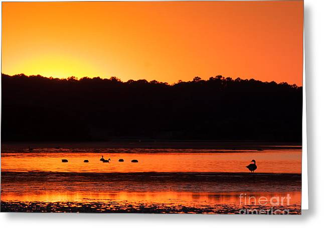 Greeting Card featuring the photograph Chincoteague Sunset by Dale Nelson