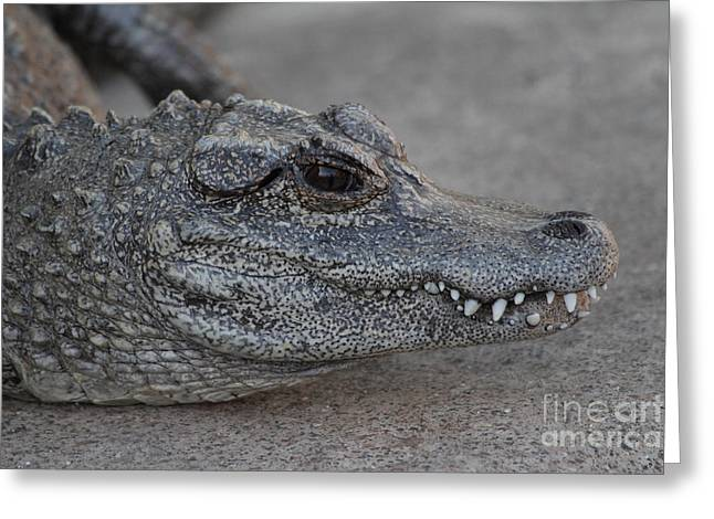 Chinese Alligator Greeting Card by Ruth Jolly