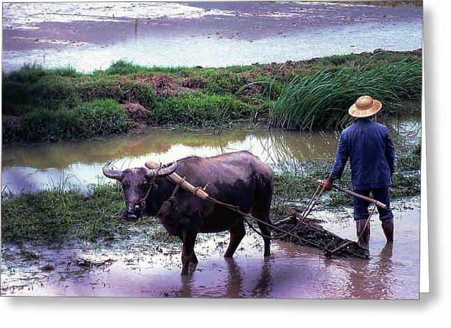 Chinese Farmer 1981 Greeting Card