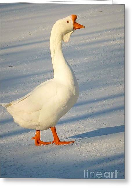 Chinese Goose Winter Greeting Card