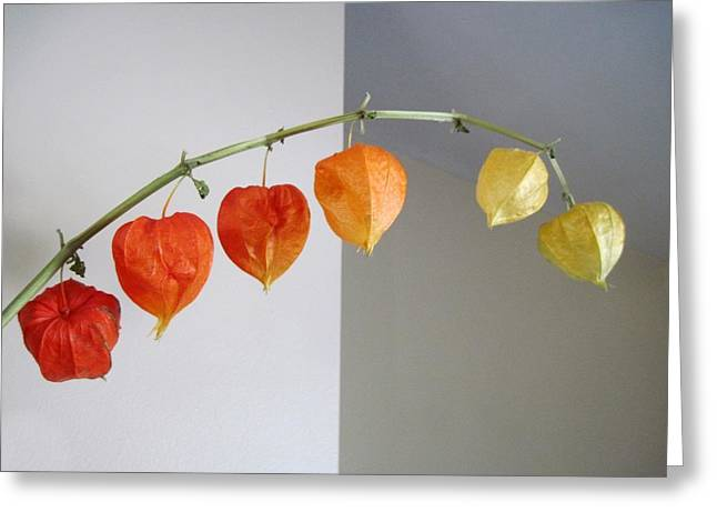 Chinese Lantern Stem Greeting Card by Patricia E Sundik
