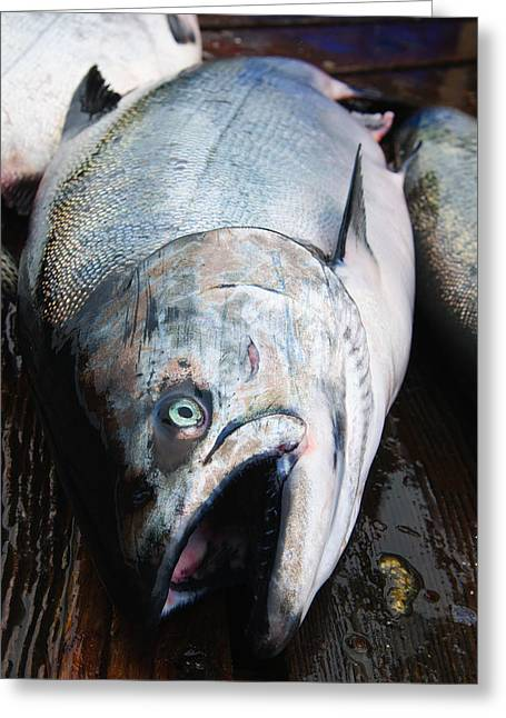 Chinook Salmon Greeting Card by Brandon Smith