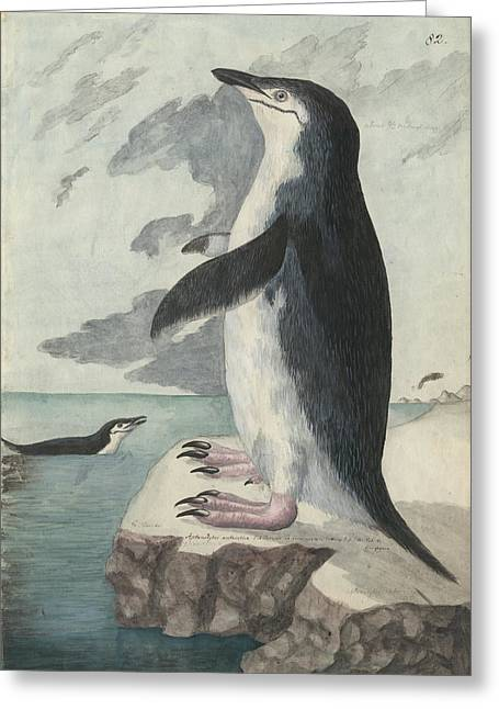 Chinstrap Penguin Greeting Card by Natural History Museum, London