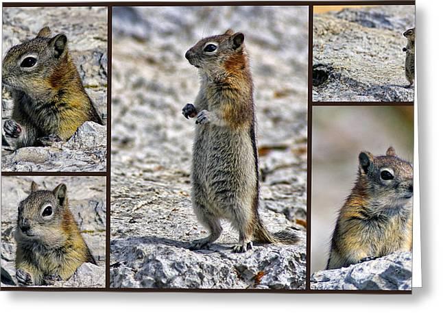Chipmunk Collage Greeting Card by Lynn Bolt