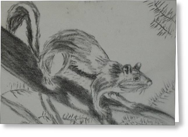 Chipmunk On The Prowl Greeting Card