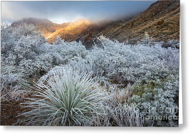 Chisos Winter Morning Greeting Card by Inge Johnsson