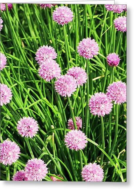 Chive (allium Schoenoprasum) Flowers Greeting Card by Adrian Thomas