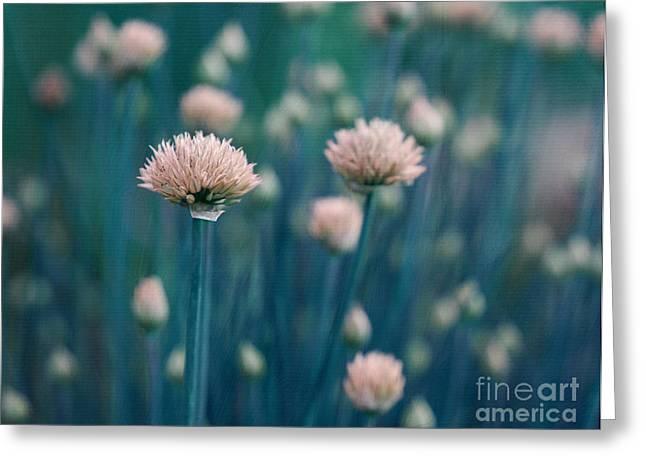 Chive Blues Greeting Card