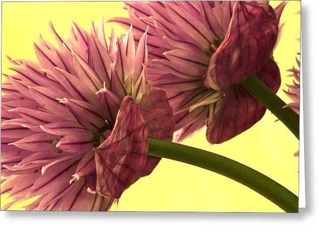Chive Macro Beauty Greeting Card