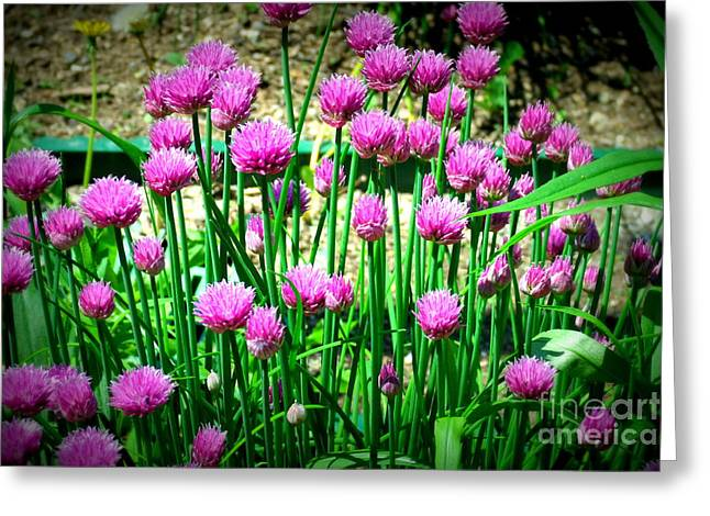 Chives Greeting Card by Christy Beal