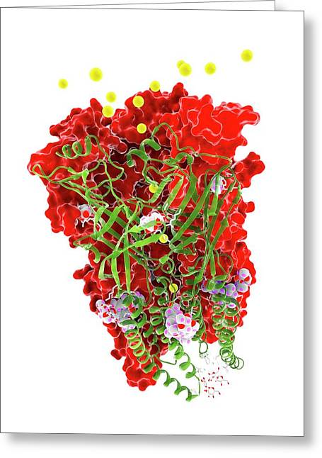 Chloride Channel And Ivermectin Complex Greeting Card