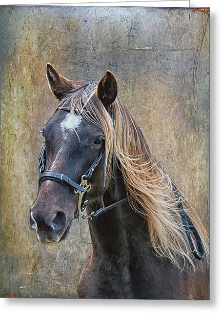 Chocolate Rocky Mountain Horse Greeting Card by Peter Lindsay