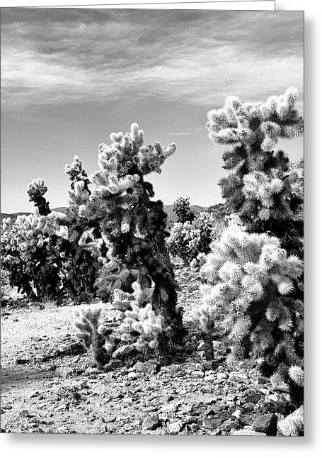 Cholla Bw Palm Springs Greeting Card by William Dey