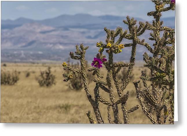 Cholla Cactus And Jemez Mountains 2 - Santa Fe New Mexico Greeting Card by Brian Harig