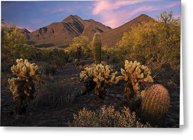 Cholla Cactus At Mcdowell Mountains Greeting Card