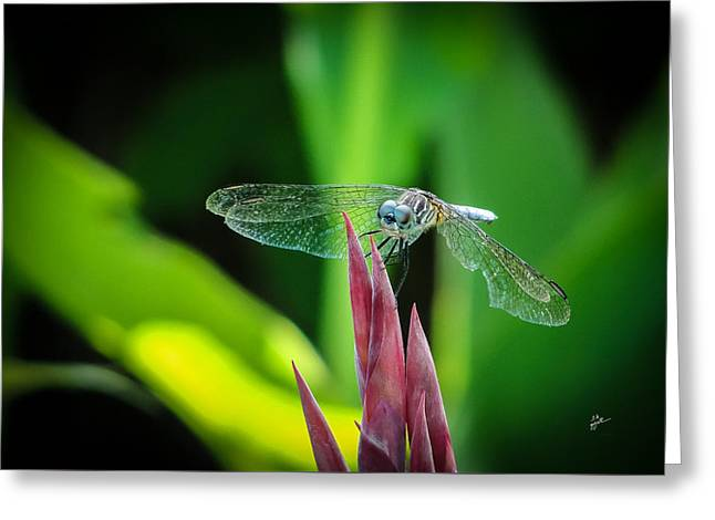 Greeting Card featuring the photograph Chomped Wing by TK Goforth