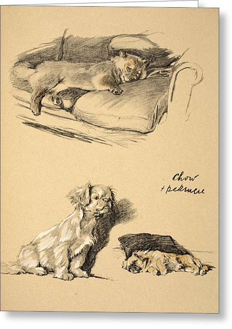 Chow And Pekinese, 1930, Illustrations Greeting Card